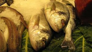 Barcelona-Wochenende-Markt-Fische