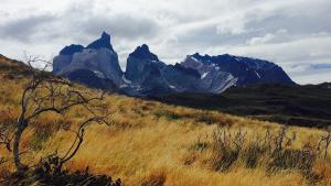 Nationalpark Torres Del Paine Feld