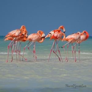 Backpacking-Mexiko-Isla-Holbox-Flamingos