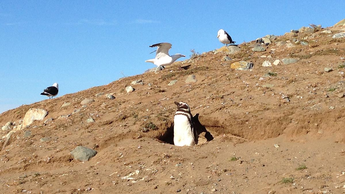 Magellan Pinguine Sonne
