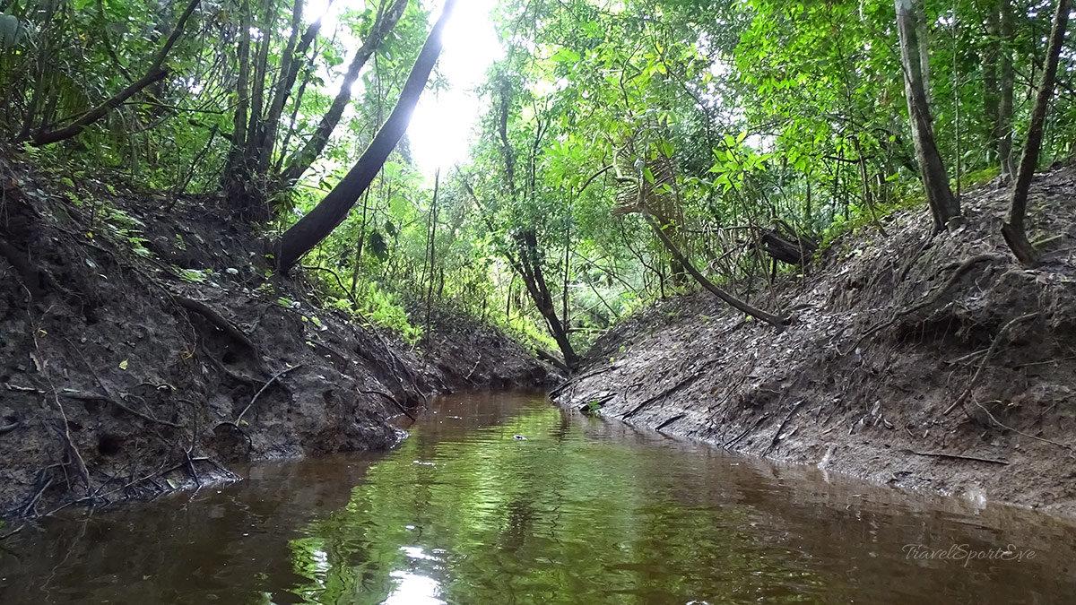 Mexiko-Rundreise-Dschungel