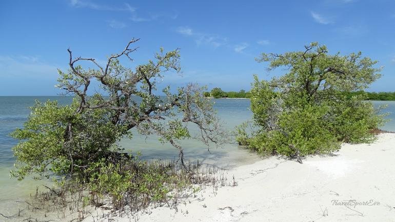 Isla Holbox Ausflüge Inseltour Strauch Wasser