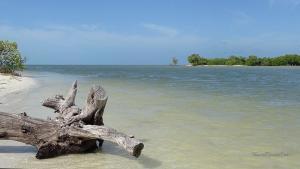 Isla Holbox Ausflüge Inseltour Wasser Ast