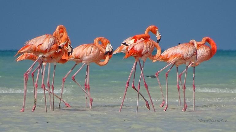 Isla Holbox Ausflüge Kanutour Flamingo