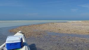 Isla Holbox Ausflüge Kanutour Kanu