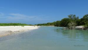 Isla Holbox Ausflüge Kanutour Sandbank