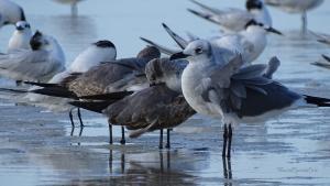 Isla Holbox Ausflüge Kanutour Vögel