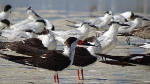 Isla Holbox Ausflüge Kanutour Vogel