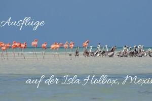 Isla Holbox Ausflüge Titel