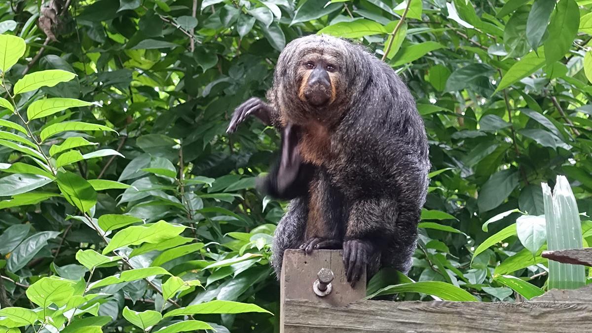 Singapur Reise Singapore Zoo