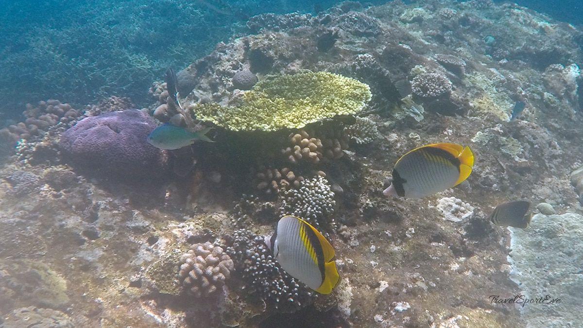 Schnorchelstop am Riff auf der Nusa Lmbongan