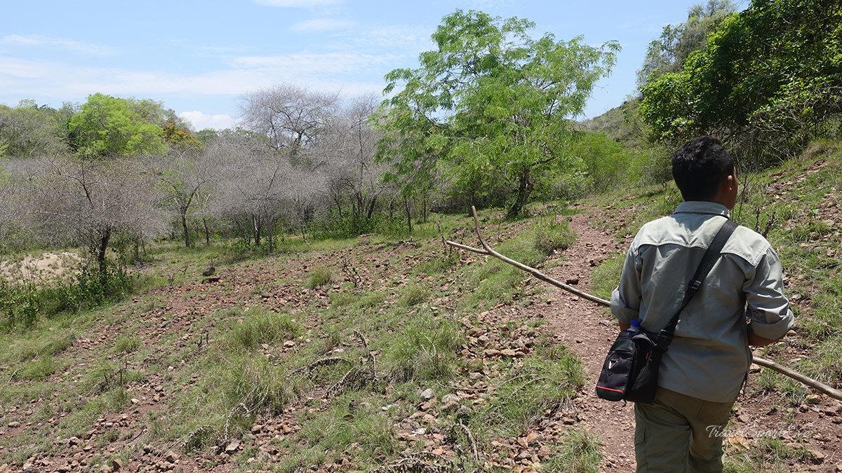 Komodo Island Indonesien Ranger