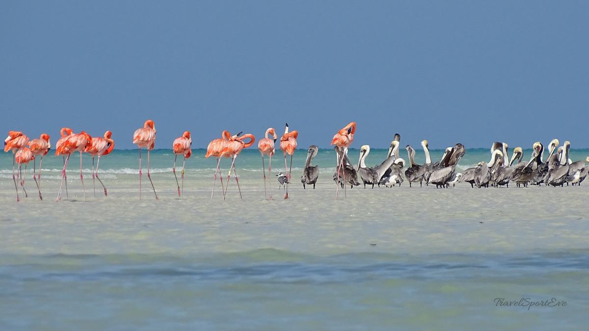 Fotoparade Isla Holbox Mexiko Beachlife mit Flamingos und Pelikanen