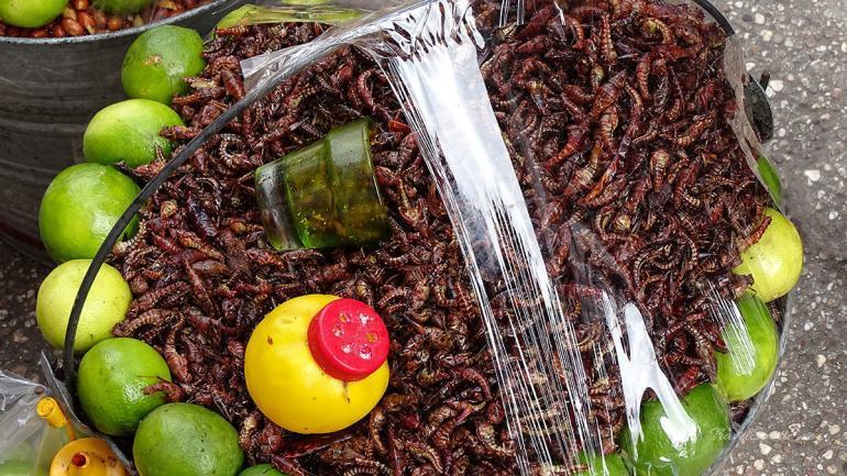 San Cristóbal de las Casas Insekten