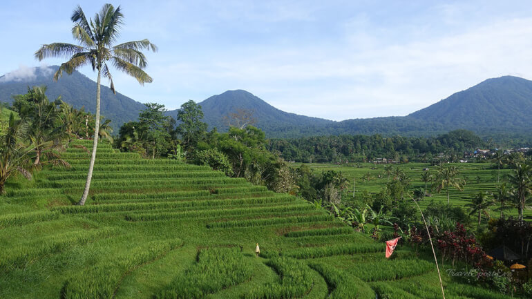 Südostasien Rundreise Bali Indonesien Jatiluwi Reisterrassen