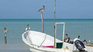 Isla Holbox Pelikane Boot