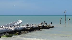 Isla Holbox Pelikane Ruderboot