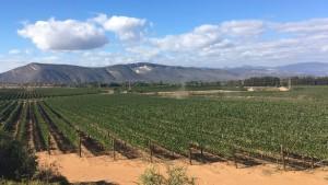 Garden Route Südafrika Radreise Weingebiet