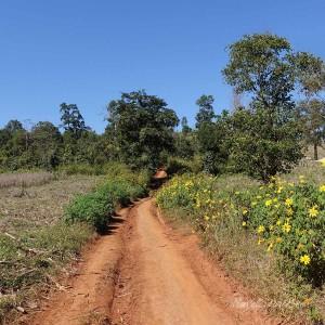 Myanmar Bilder Hsipaw Wanderung